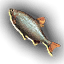 Food_Chub_Fish_Small.png